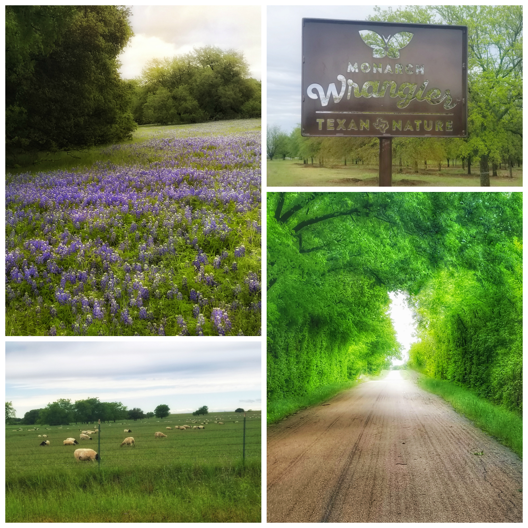 Waco, Crawford, Bluebonnets, Monarch Wrangler, Bush Ranch