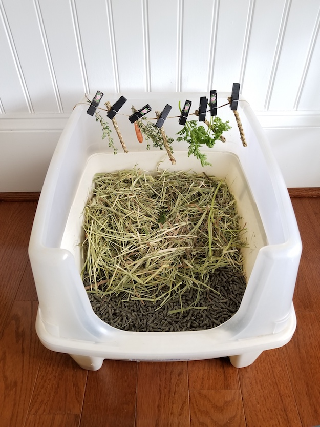 Large cat litter box used for rabbits