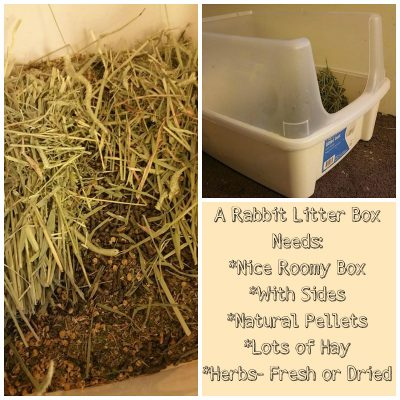 An Additional Litter Box for Rabbits