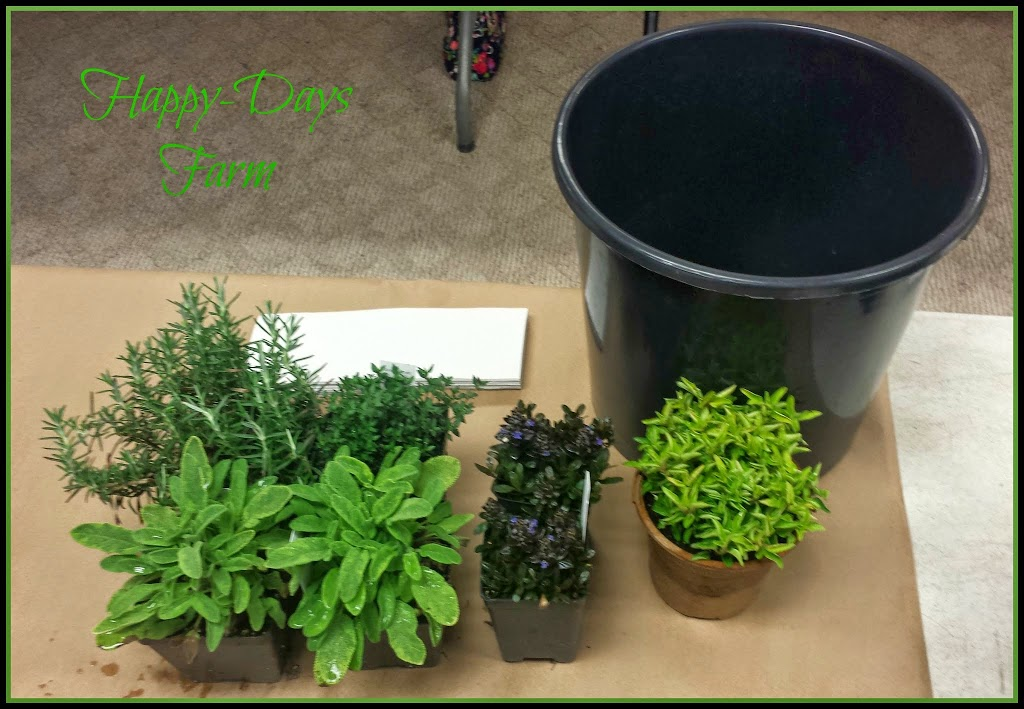 A Living Herb Wreath Project