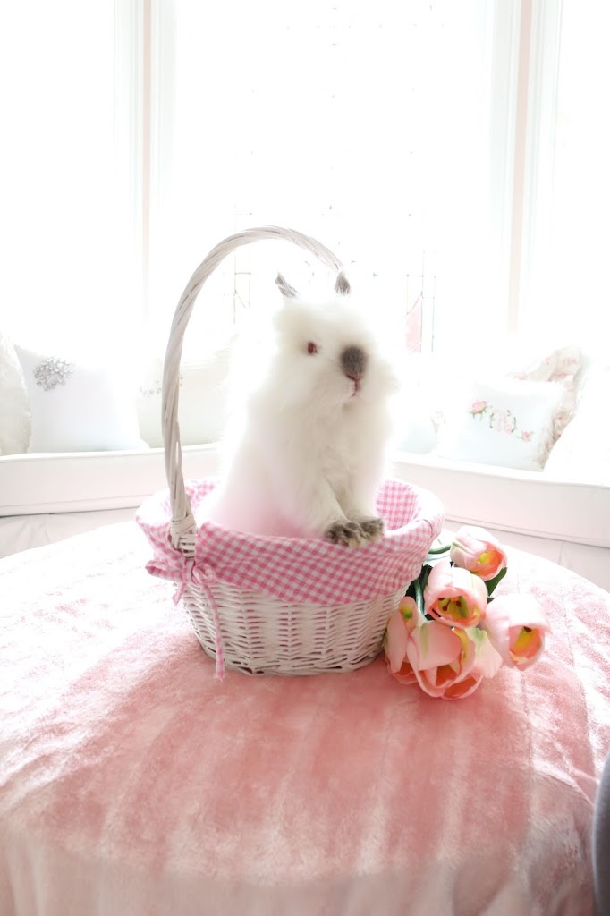 Help! Ten Ways To Care For My New Easter Bunny