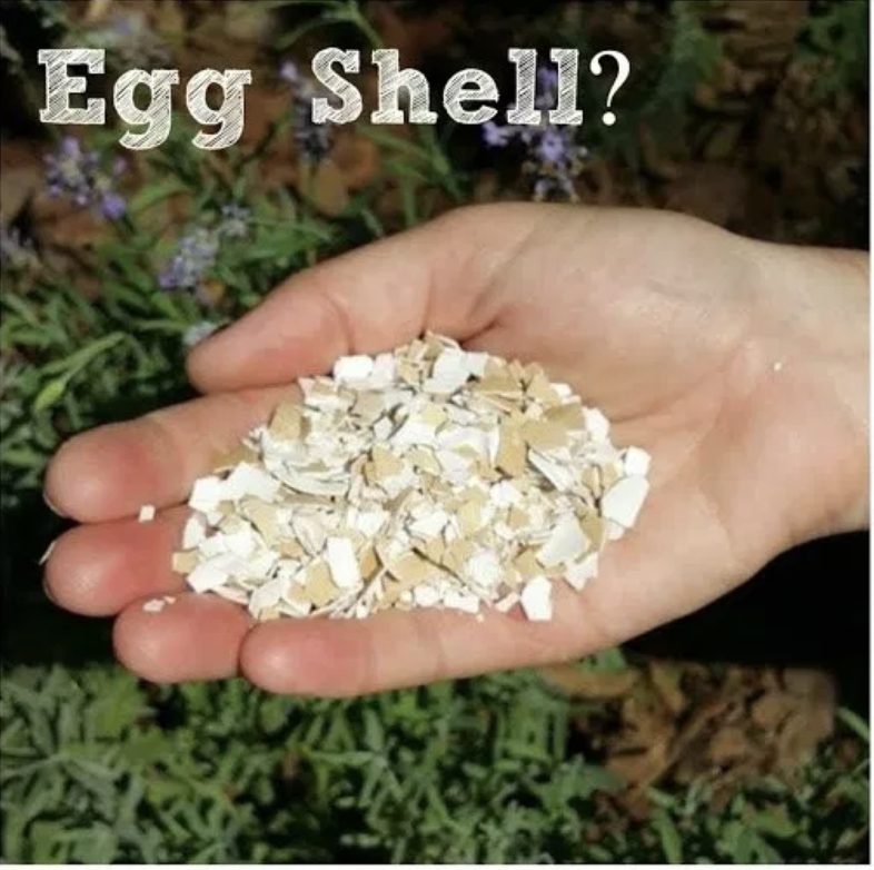 Egg Shell & Oyster Shell: The Great Debate