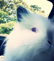 Traveling with your Rabbit