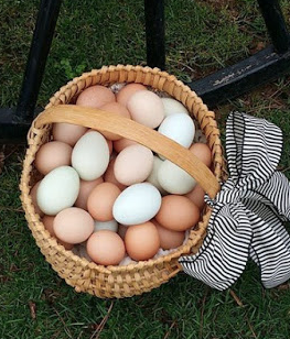 Why Chickens Begin Laying More Eggs In Spring
