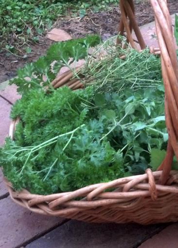 Planning the Herb Garden