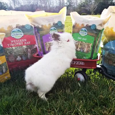 Hay in a Rabbit's Diet- Oxbow Animal Health