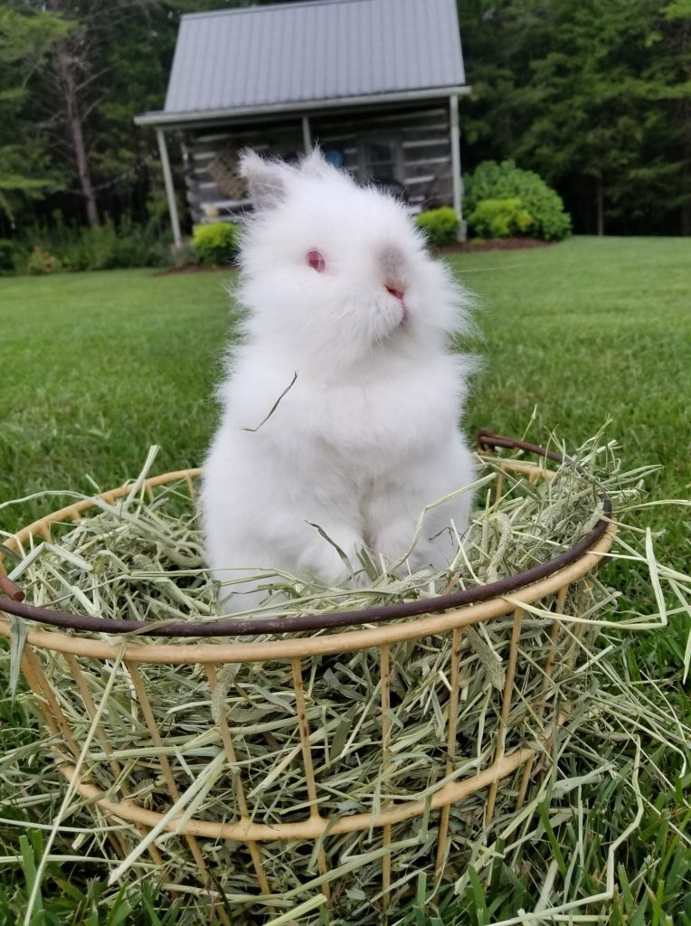 easter bunny, rabbit