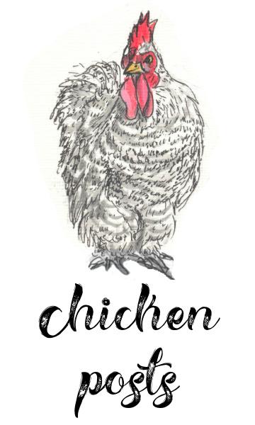 Chicken Posts