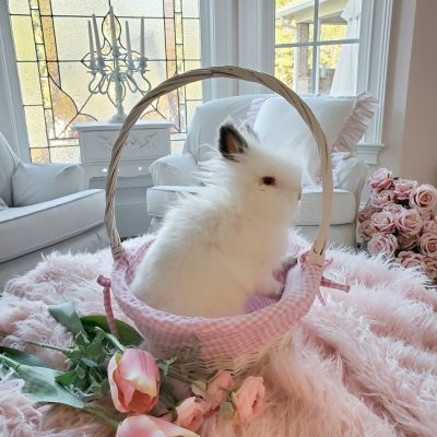 Top 10 Reasons NOT to Buy an Easter Bunny Rabbit